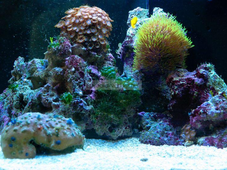 Nano reef tank(50liter)  Nano tengeri akvárium, 50 liter