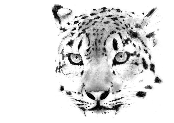 Leopardo | Lápiz sobre papel (trabajo a pedido)