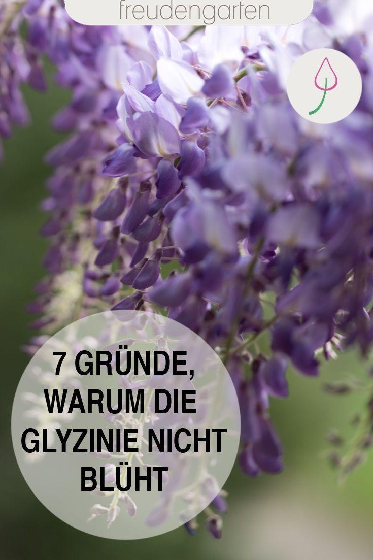 Blattlause Naturlich Ohne Chemie Bekampfen Hortensienvermehren Blattlause Naturlich Bekampfen In 2020 Blauregen Pflanzen Unkraut Im Garten Glyzinie
