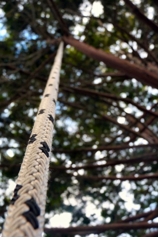 Rope in tree