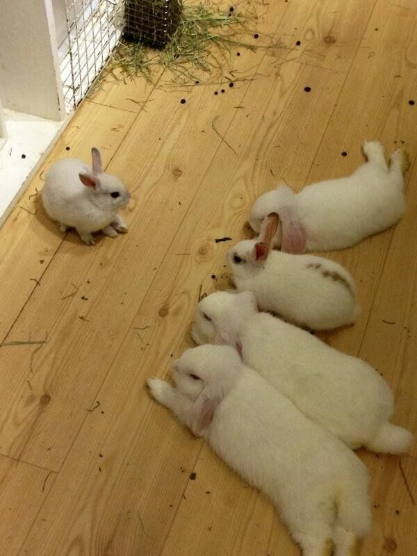 How adorable.group of bunnies.