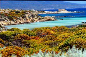Parco nazionale dell'Asinara - Sardegna - Italy