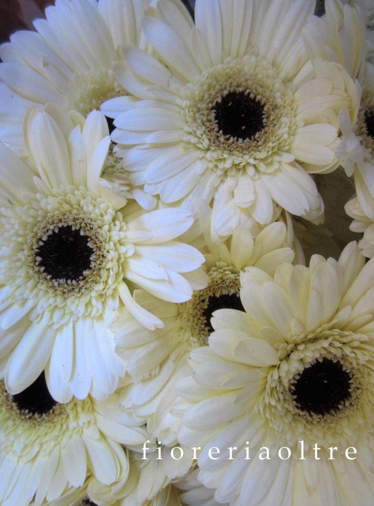 Fioreria Oltre/ White gerbera daisies