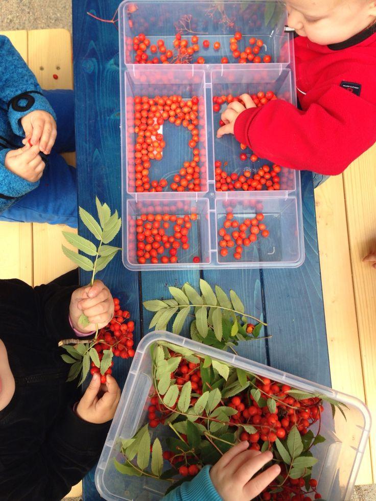 Rönnbär i skapande miljö