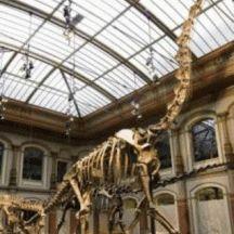 ARTE PARA NIÑOS: Una visita al Museo de Ciencias Naturales de Madrid sin salir de casa. RECURSOS ONLINE