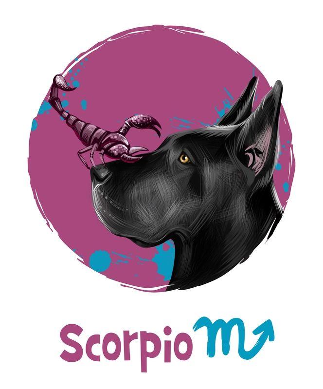 2018 Horoscopes Year Of The Dog For Western Zodiac Signs Zodiac Scorpio Art November 12 Zodiac
