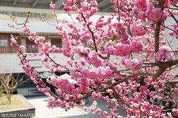 * 서울파트너스하우스에 흐드러지게 핀 아름다운 꽃