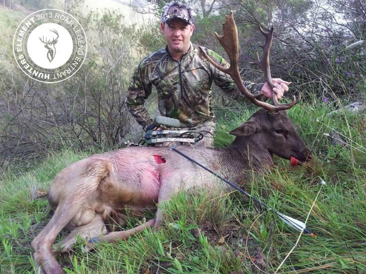 Kris Banks with a Fallow taken with a Bear Mauler 70lbs with rage 2 blade from 28m