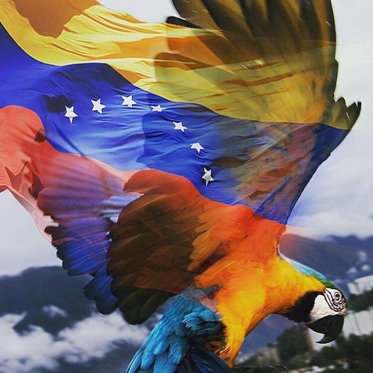 Feliz 19 de abril! @Regrann from @mabelcornago  #LaCuadraU #GaleriaLCU #AlzarVuelo #Libertad #caracas #venezuela #19deabril