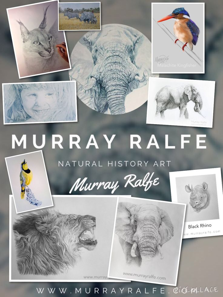 Murray Ralfe Natural History Art  www.murrayralfe.com