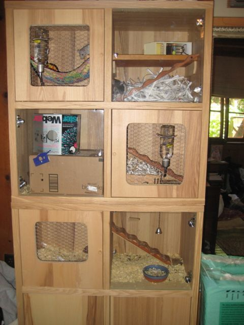You Fancy Rat Cages Your What Put Do