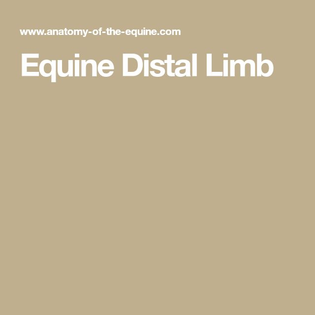 Best From Anatomy Of The Equine Images On   Horse