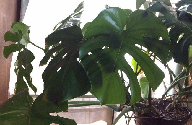 金運アップ 風水に良い観葉植物10選 観葉植物 植物栽培 風水 植物