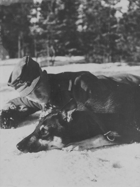 Finnish Corporal cynologist with his dog. Pin by Paolo Marzioli