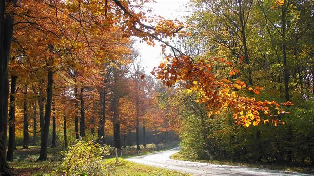 Efteråret er over os. Husk du hos Tintpartner.dk kan få lavet solfilm i bil eller bygning.