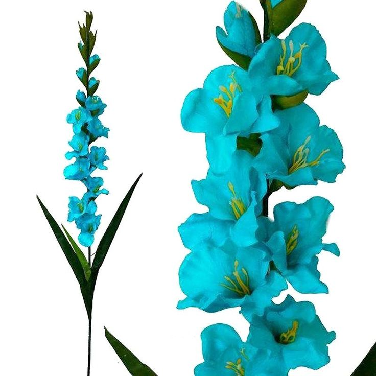 """6 Gladiolus Stems - Turquoise 