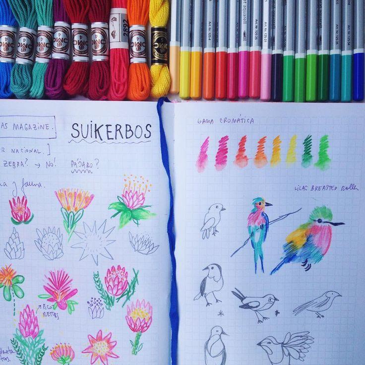 Inspiración flora y fauna sudafricana 🌺🌿 Análisis de formas y colores para mi proxima colaboración para una revista de Cape Town! 😉😱 #srtalyloentodosloscontinentes #felicidad #bocetos #suikerbos #lilacbreastedroller #dmcspain #wip #srtalyloideasmagazine