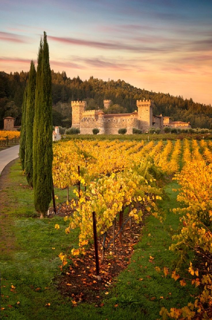 Castello Di Amorosa - A castle and a winery, this place attracts people with its uniqueness and the good wine. The starting price for wine tasting is 35$, for several Italian wine types, including Merlot and Cabernet Sauvignon. Castelo di Amorosa was built in a 13th century-inspired Tuscan style by Medieval architecture enthusiast owner Dario Sattui. This winery was first opened to the public in April 2007.