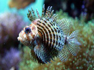 Un pez tropical en un acuario