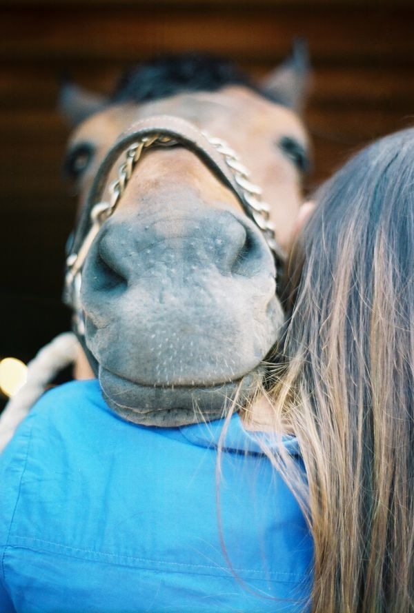 Horse getting some lovin!