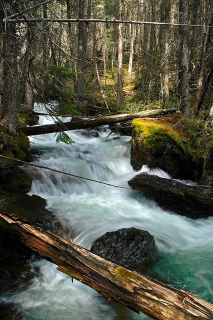 Sunken Creek  Sunken Creek in the East Kootenays of British Columbia.  by Kootenay Hulio