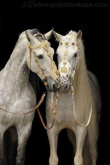 stunning horses and bridles <3