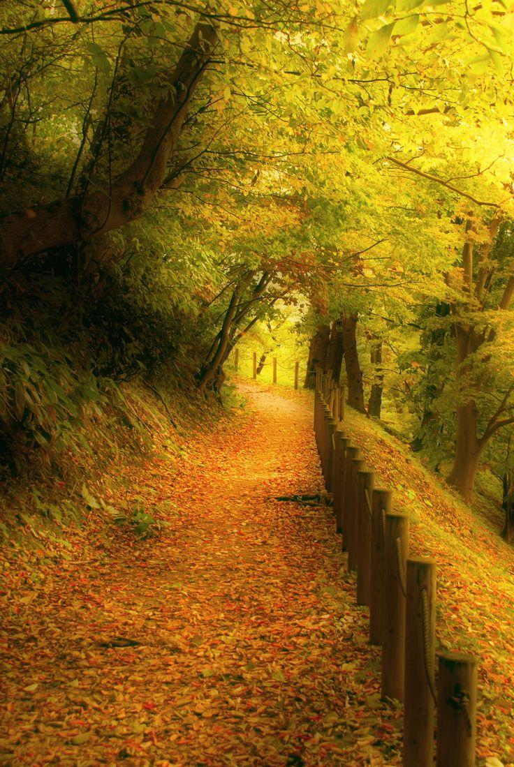 A path well chosen