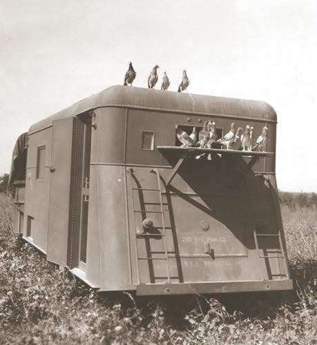 Pigeons in a mobile loft during training in the Carolinas (National Archives)