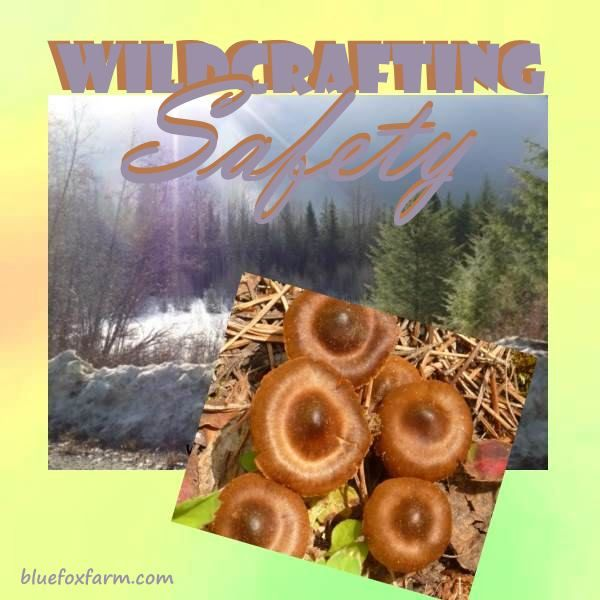 Wildcrafting Safety - stay safe out there - some common sense tips... Wildcrafting | Bushcraft