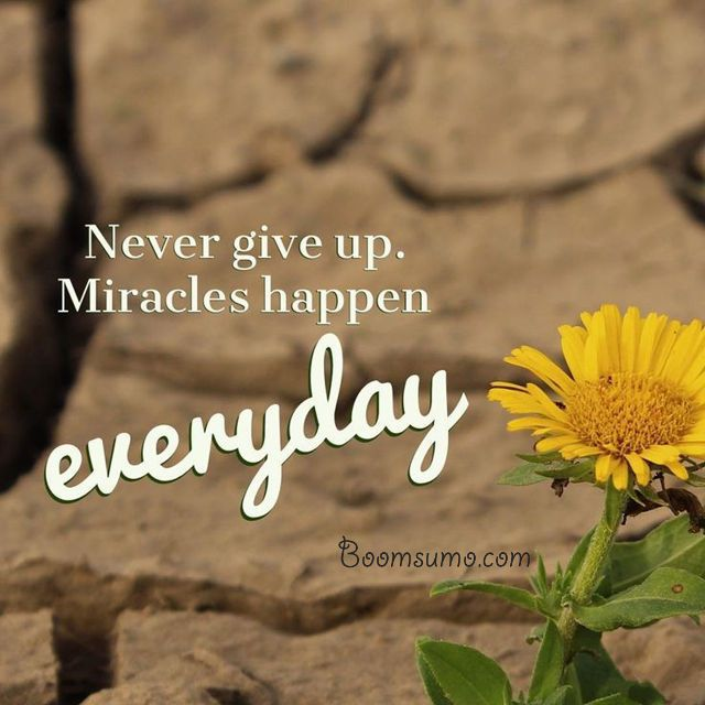 nice Short Quotes about life 'Miracles happen everyday, cool quotes
