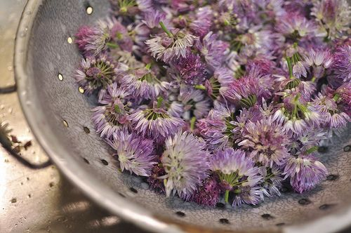 Chive Blossom Vinegar | I have so many of these right now and was wondering what to do with them