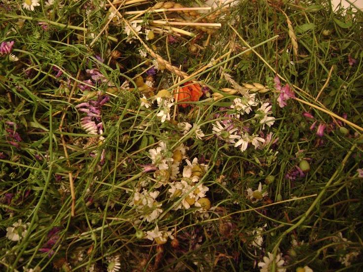 Hayflowers at home
