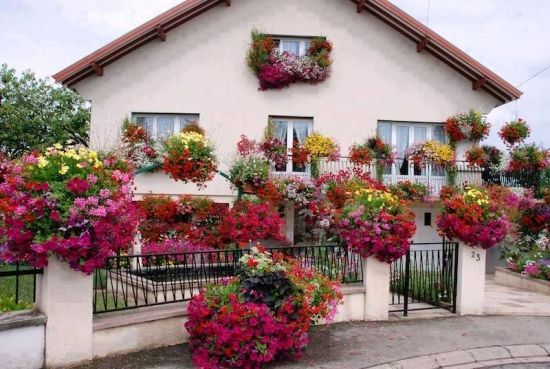 Case cu flori