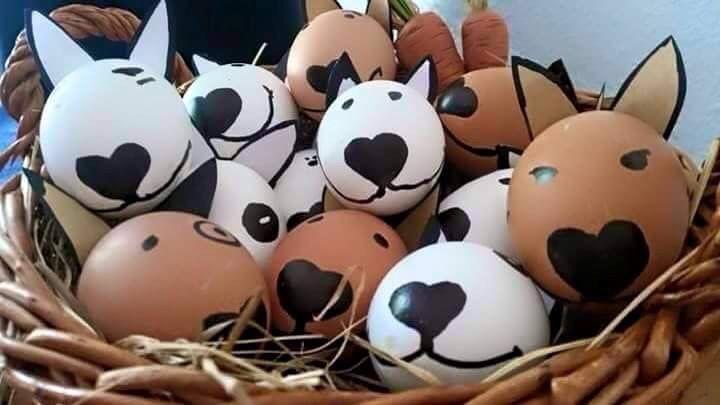 Cute Bull Terrier Eggs