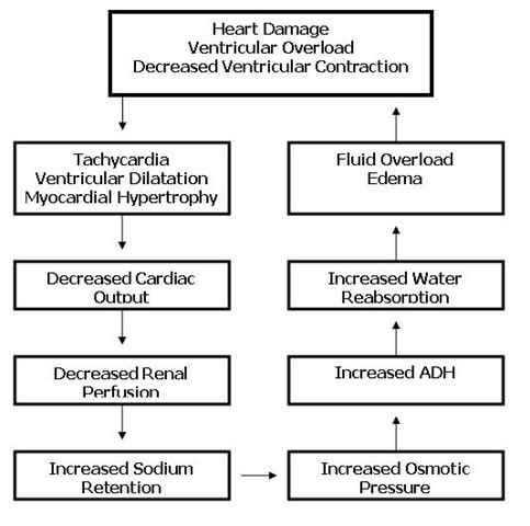 This page contains the complete congestive heart failure nursing lecture e.g. (definition, pathophysiology,