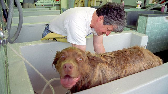 Dog shedding much? Use a little fabric softener (a safe one) at bath time to help your pooch stop dropping so much fur! - For a medium size dog: add 1 cup of liquid fabric softener to 5 gallons of water, pour over dog (careful to avoid the head) then rinse out. (from lifehacker.com)