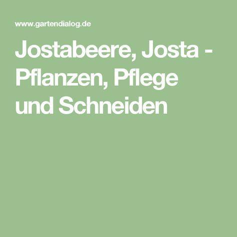 Jostabeere, Josta - Pflanzen, Pflege und Schneiden