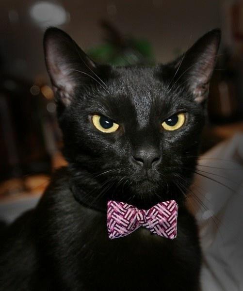 Гифка черная кошка пилит ногти