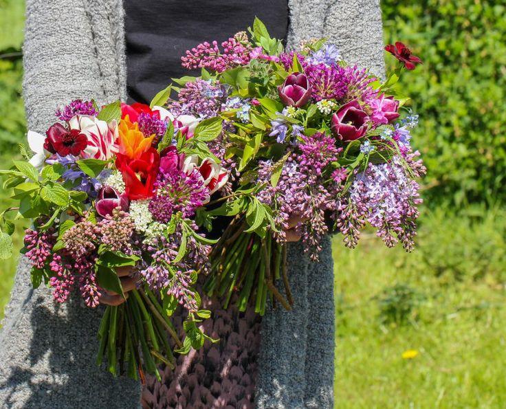 Organic tulips, allium and cosmos and wild flowers, vildevioler.dk