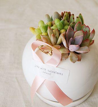 succulents store solxsol