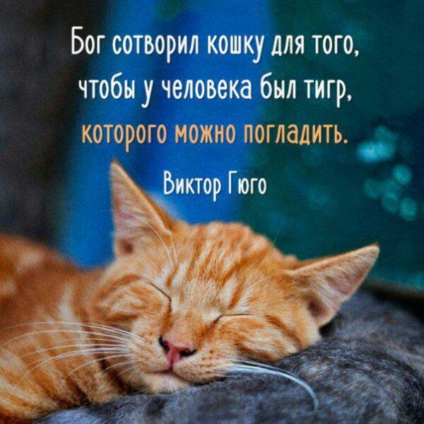 Смешные цитаты картинки о кошках