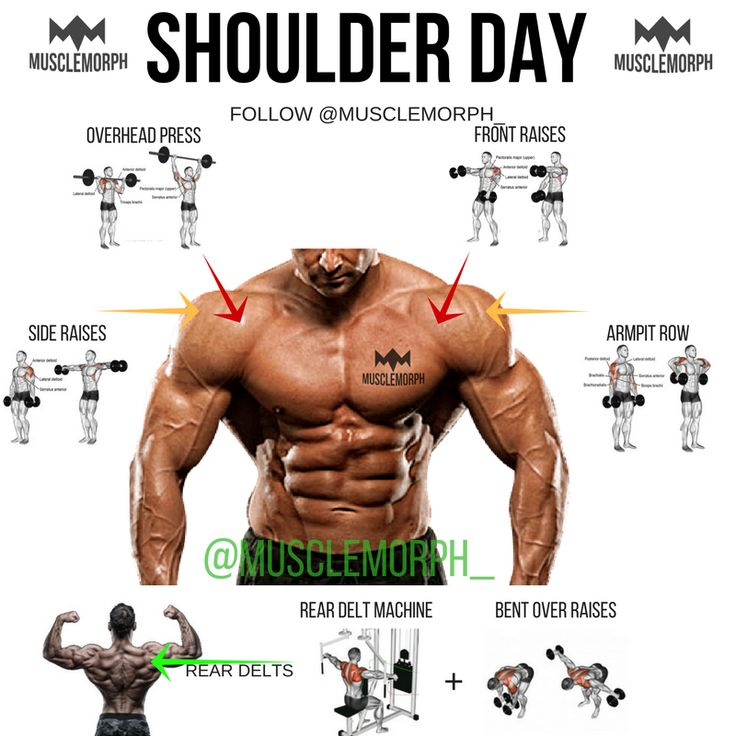 gym exercise for chest pdf