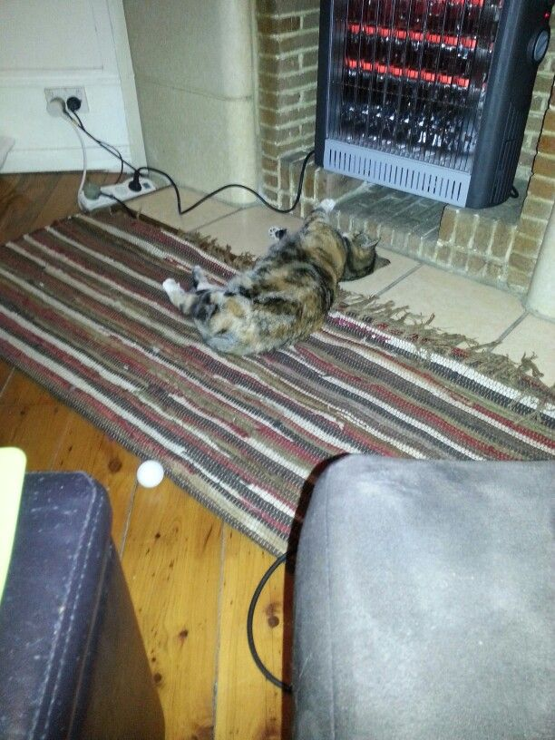 Abby has discovered the heater and is in love ♥♥