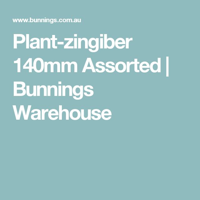 Plant-zingiber 140mm Assorted | Bunnings Warehouse