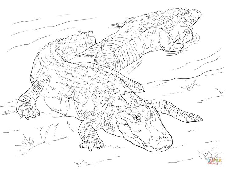 coloring pages for reptiles alligators - photo#14