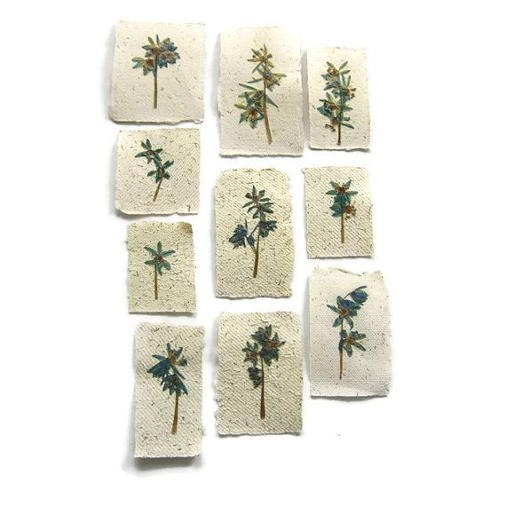 Pressed flowers on handmade paper for your craft projects, handmade cards or to frame as art - Pressed flower art, dried flowers - DIY card