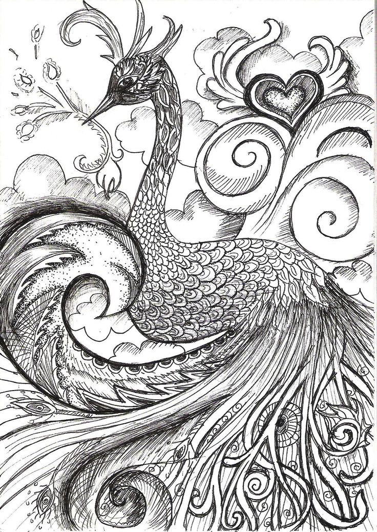 love peacock coloring page 12 best images about black white on peacocks 4885
