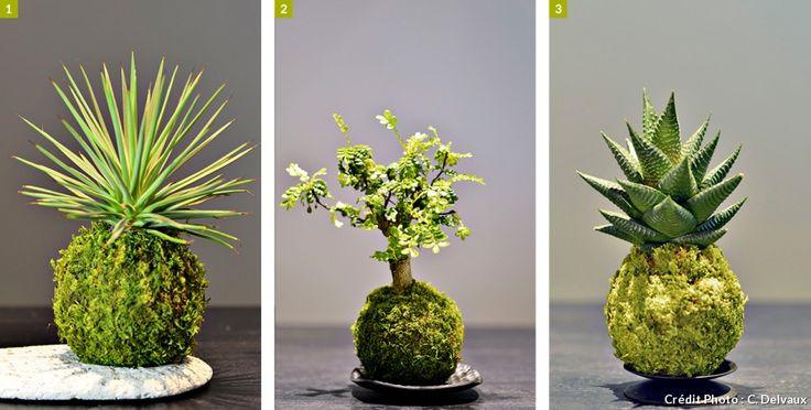 9 plantes pour cr er des kokedama pour cr er plantes et. Black Bedroom Furniture Sets. Home Design Ideas