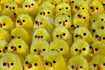 a closeup of lots of little yellow easter chicks