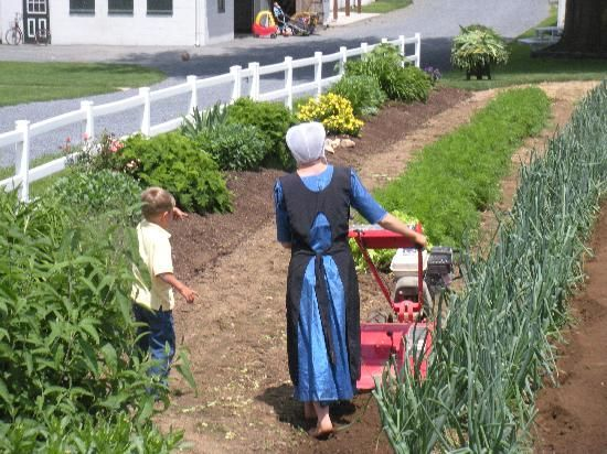 amish | The Amish Experience (VIP Tour) - Bird in Hand - Reviews of The Amish ...